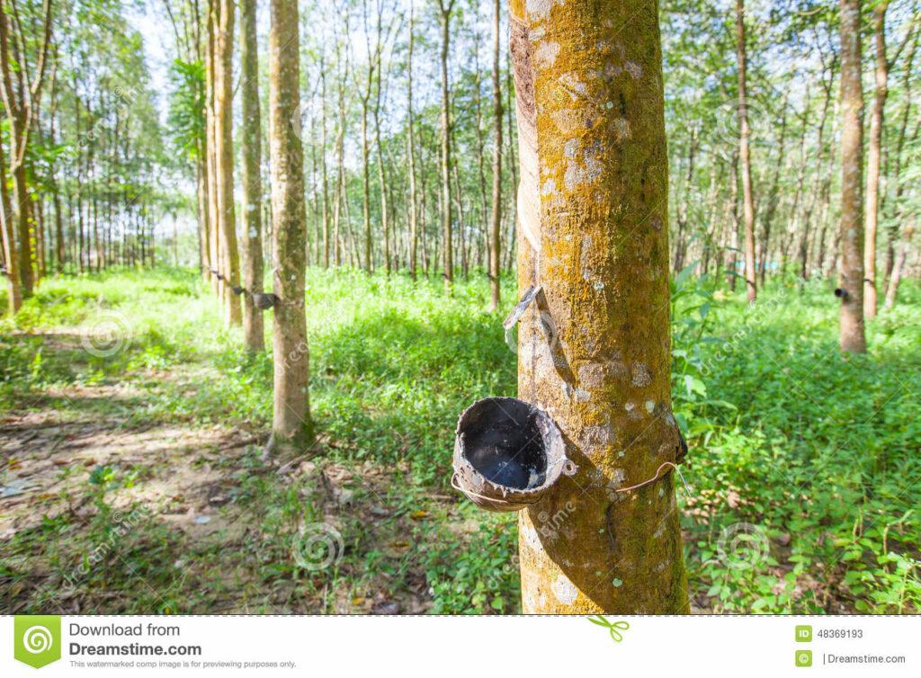 houten blokken gemaakt van rubber bomen